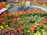Blumen mit Wasserspiel